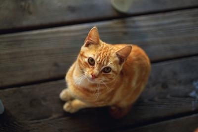 自宅で猫がいてもヨガ講師になれる